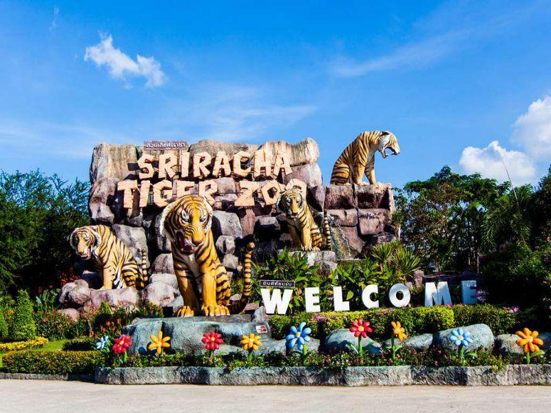 tiger-zoo-pattaya